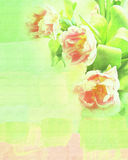 Green texture with flowers tulips Stock Image