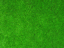 Green texture grass background Royalty Free Stock Photo