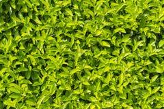 Green texture. Royalty Free Stock Photos