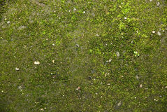 Green textured. The green textural background covered with elements of grass and stones royalty free stock photography