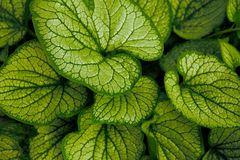 Green textured leaves Royalty Free Stock Photography