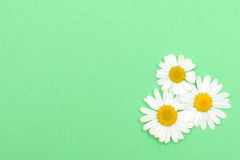 Green textured paper with daisies. Background Stock Image