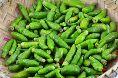 Green Thai chilli pepper Stock Photography