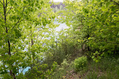Green thicket in the woods by day. Green thicket in the woods by day Stock Images