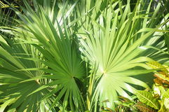 Green thickets of tropics. Royalty Free Stock Photo