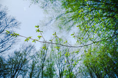 Green thin branch Stock Images