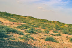 Green Thorny Bushes on a Hill Stock Photography