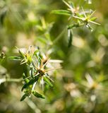 Green thorny plant in a park. In the nature Royalty Free Stock Photography
