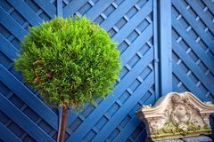 Green plant in front of a blue fence stock photo