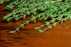 Green thyme twigs and on wooden background Stock Image