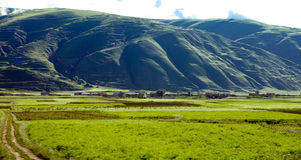Green Tibet landscape on sunny day with color filter Royalty Free Stock Photos
