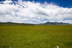 Green Tibet landscape on sunny day with color filter Royalty Free Stock Photo