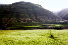 Green Tibet landscape on sunny day with color filter Stock Photos