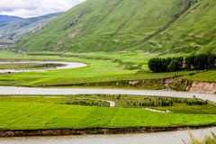 Green Tibet landscape on sunny day with color filter Royalty Free Stock Photography
