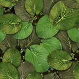 Pattern Green tropical water lilies. With this green .TIF pattern with tropical water lilies you can create an amazing atmosphere around you - print for your Stock Illustration
