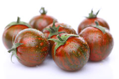 Green tiger tomato is wet. Few Green tiger tomato is wet Stock Photos