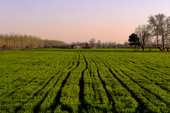 Green tilled harvest field at sunset in Edirne Turkey Royalty Free Stock Images