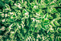 Green leaf on nature backgrounds. Green tiny leaf on nature backgrounds stock images