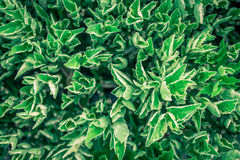 Green leaf on nature backgrounds. Green tiny leaf on nature backgrounds royalty free stock photo