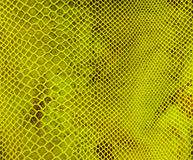 Green tissue in the mesh Royalty Free Stock Photography