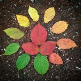 Colors of Autumn royalty free stock photos