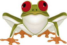 Green toad Stock Photos