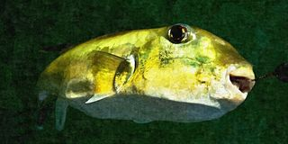 Green Toad Fish. Oil Painting Simulation Photo. Stock Images