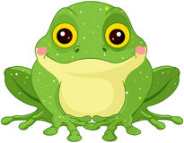 Green Toad. Illustration of cute green toad royalty free illustration
