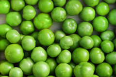 Green toamtoes Royalty Free Stock Photo