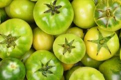 Green tomato, close up Stock Image