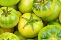 Green tomato, close up Royalty Free Stock Photo