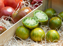 Green tomato variety from Provence Royalty Free Stock Photos