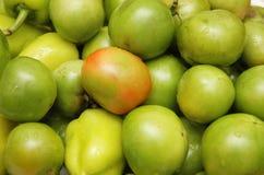Green tomatoes royalty free stock photos