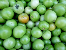 Green tomatoes. Some green tomato on market exposed for selling Stock Photography