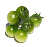 Green tomatoes Royalty Free Stock Photo