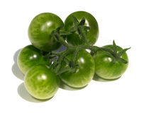 Green tomatoes Stock Photos