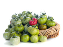 Green tomatoes and one red one Stock Photography