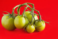 Green tomatoes on red. Background royalty free stock image