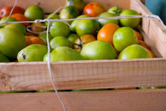 Green tomatoes in wood box Stock Images