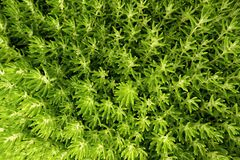Green tone background wallpaper feel relax and fresh