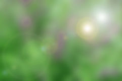 green tone blurred nature background with flare Royalty Free Stock Photos