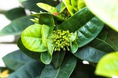 Green tone leaf on blackground in sping sumer. Front view from the top, technical cost-up Royalty Free Stock Photos