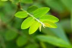 Green tone leaf isolate on blackground in sping sumer. Front view from the top, technical cost-up Royalty Free Stock Photography