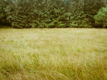 Green toned forrest and meadow simple nature background. Forest trees and meadow, simple natural background backdrop, without sky, nearly just duo chrome or Stock Photo
