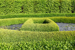 Green topiary Royalty Free Stock Photos