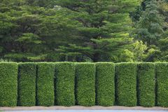 Green topiary wall for separating and zoning garden to different room and utility purpose. Green topiary wall for separating garden to different room and utility royalty free stock photos