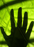 Green touch. If we don't care more about our life envionment,we'll have less chance to touch green Royalty Free Stock Photography