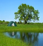 Green tourism in the summer. Green camping tent and the big oak reflected in water of small lake. Two merged files royalty free stock images