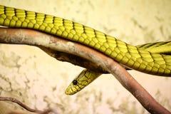 Green toxic snake Royalty Free Stock Photography