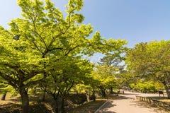 Green trail in Nara Park, Japan Stock Images